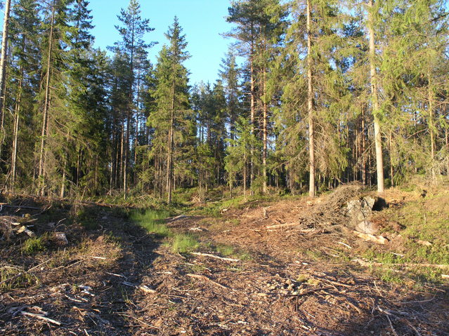 Logging track leading to the point