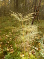 #9: Horsetails at the Confluence Point