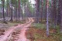 #5: The trail goes through a pleasant pine heath