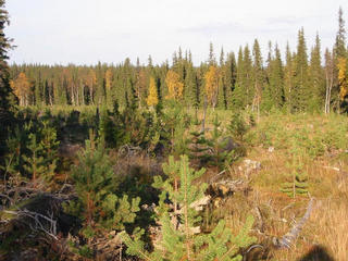 #1: The clear-cut area as a whole.  The confluence is at the far end to the right near the tall yellow birch.