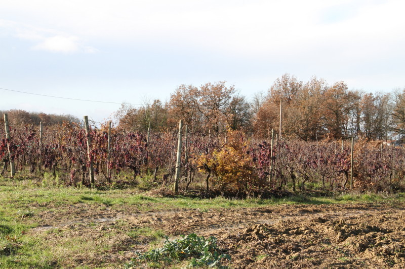 Small vineyard, about 80 metres from the CP