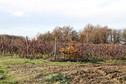 #8: Small vineyard, about 80 metres from the CP