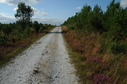 #9: The road next to the confluence point
