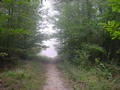 #3: The trail leading to the confluence on a misty morning