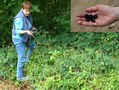 #7: Collecting (and eating!) blackberries on the spot