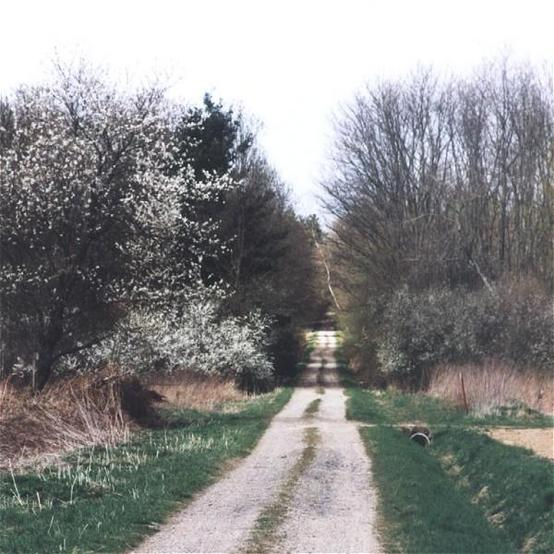 The dirt road at the east side of the confluence in spring time