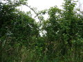 #4: West: hedge right in front of me