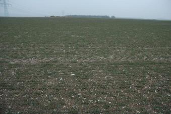 #1: Conflunce in a newly planted wheat field - looking toward East