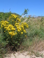 #10: Flowers in the dunes