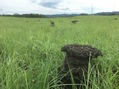 #10: Termite mounds