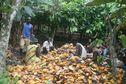 #5: Locals shelling cocoa near the Confluence