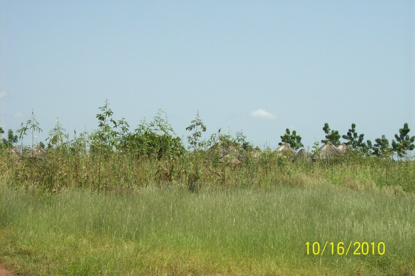The Compound from a distance