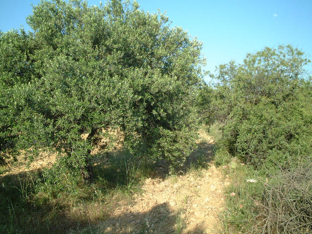 View to the South, just olive trees.