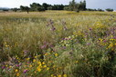 #8: The wild flower field near the confluence area