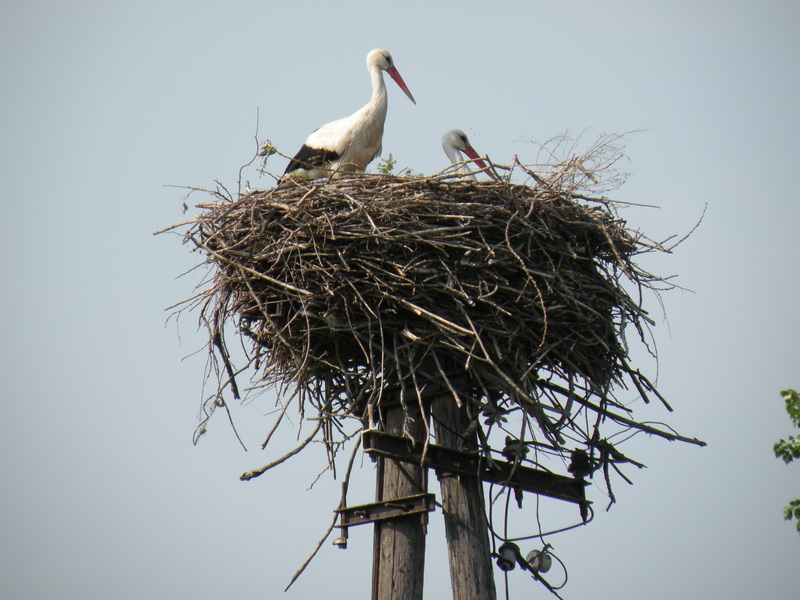 Stork's Nest in 1 km Distance