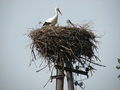 #9: Stork's Nest in 1 km Distance