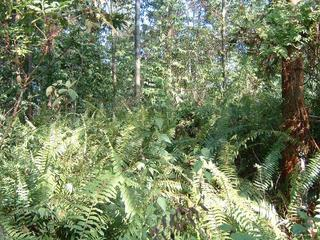 #1: Jungle near the equator