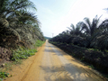 #5: Tolan estate main road