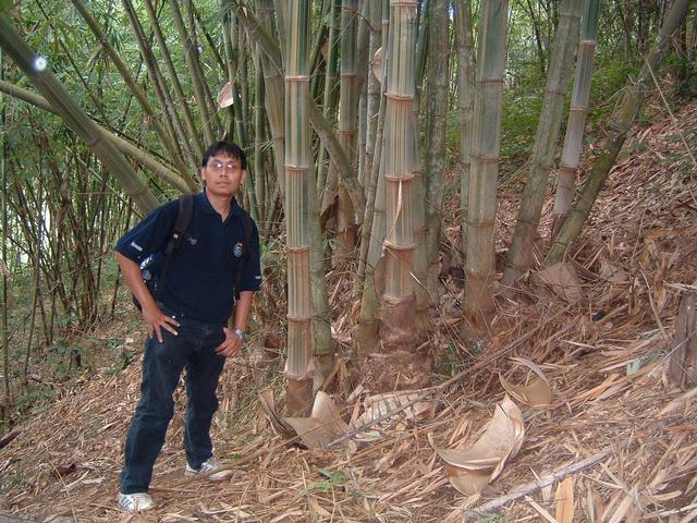 Riswandi and bamboo trees near CP