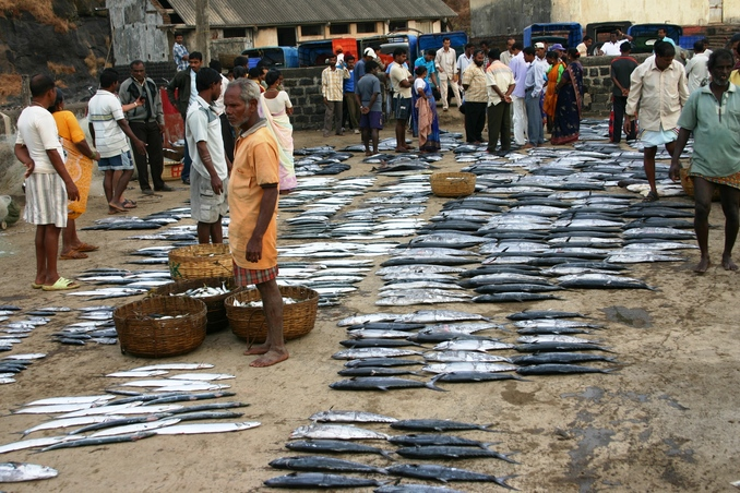 Fresh fish ready for auction
