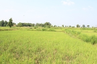 #2: Facing North - Paddy fields