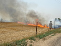#8: Slash-and-burn farming near the confluence