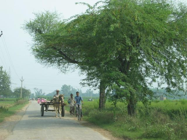 On the road between Dabkheer and Lohara