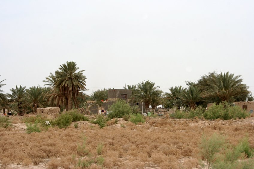 Houses and palm trees adjacent to the confluence point