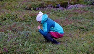 #6: Visitor collecting Blueberries