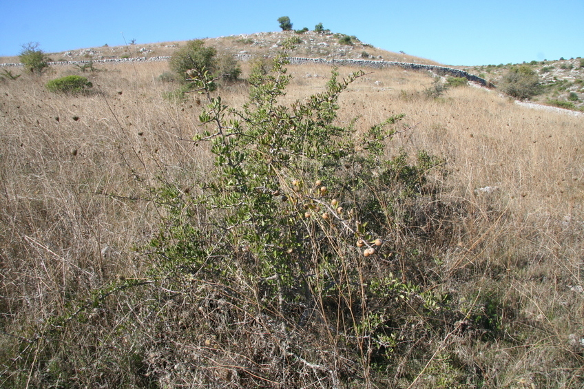 The bush at the confluence