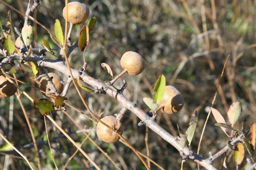 Unidentified Fruit