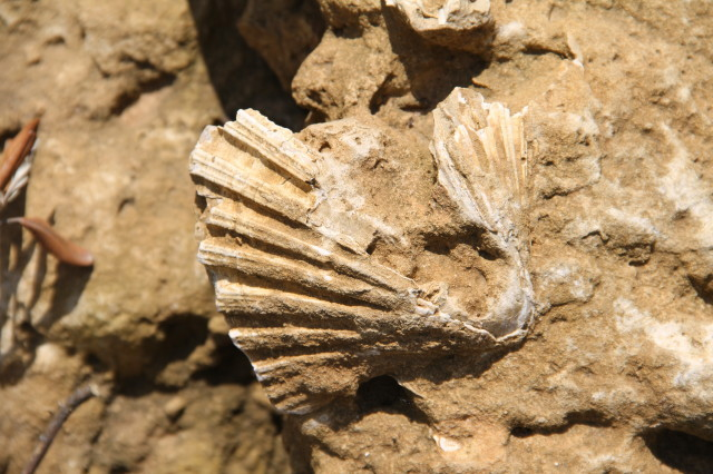 Fossilised sea creature, a few metres from the CP