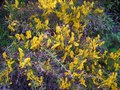 #7: Prickly bush with beutiful flowers
