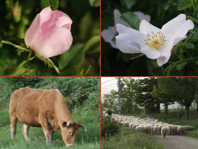 conservation of flora and fauna essays This is a short essay on wildlife conservation for students the purpose of wildlife conservation is to protect wild flora and fauna against the encroachment of.