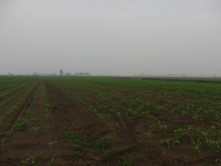 #1: Confluence in the cornfield - southwest (1/3 right side)