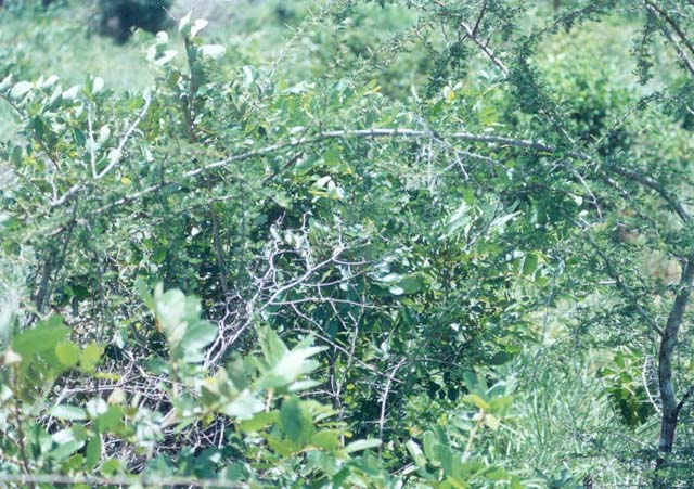 Southerly view obscured by thorny shrub.