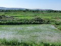 #7: Ricefields