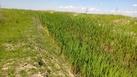 #5: View West and irrigation canal