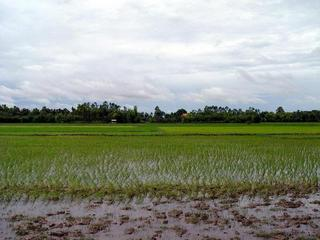 #1: Paddy fields (south) with confluence (20m)