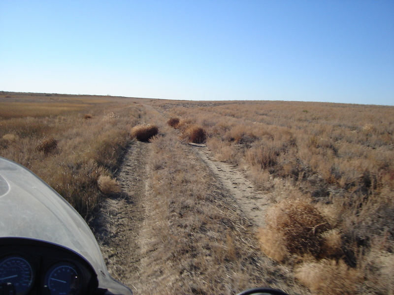 Tumble-weeds on Trail