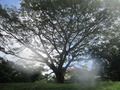 #7: A magnificent tree about 30 metres from the point