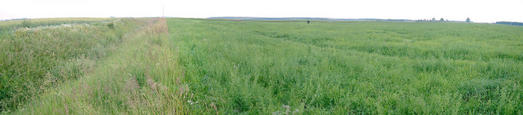 #1: Panoramic view from the confluence of N56 E024 in Lithuania.