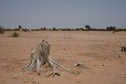 #6: Sabkha plain outside the bush