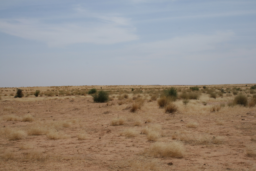 Dunes in grassland north of the Niger