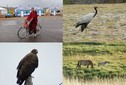 #8: The people, birds, mammal in Mongolia