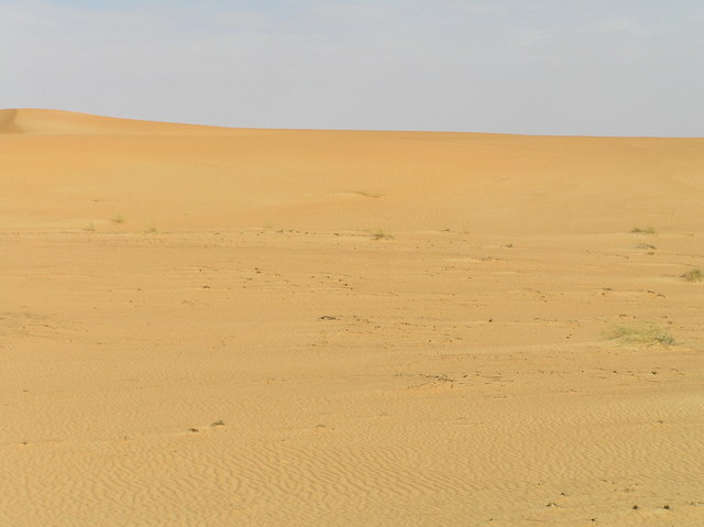 Looking north: dune