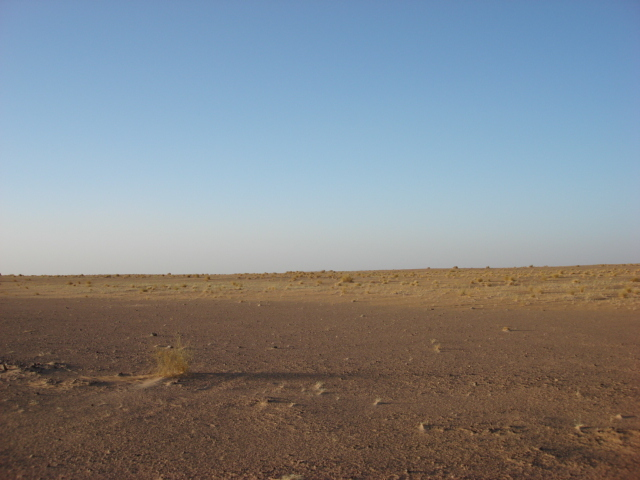 From the point to North (the field of dunesand grass clumps)