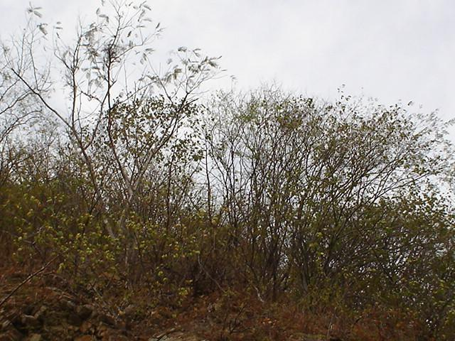 East View vista Este