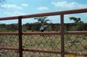 #3: Antonio in the Bull Pen