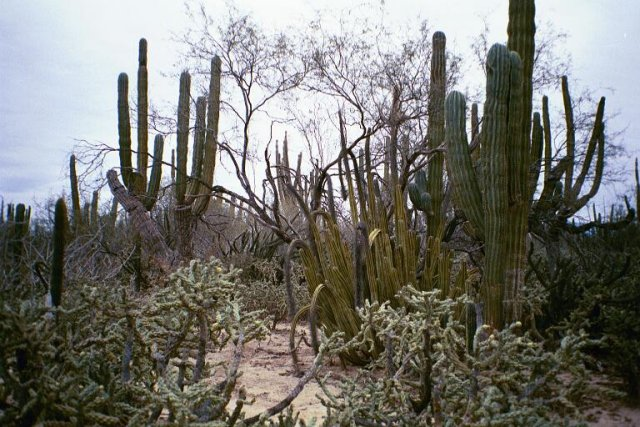 A view of cactus at the confluence point